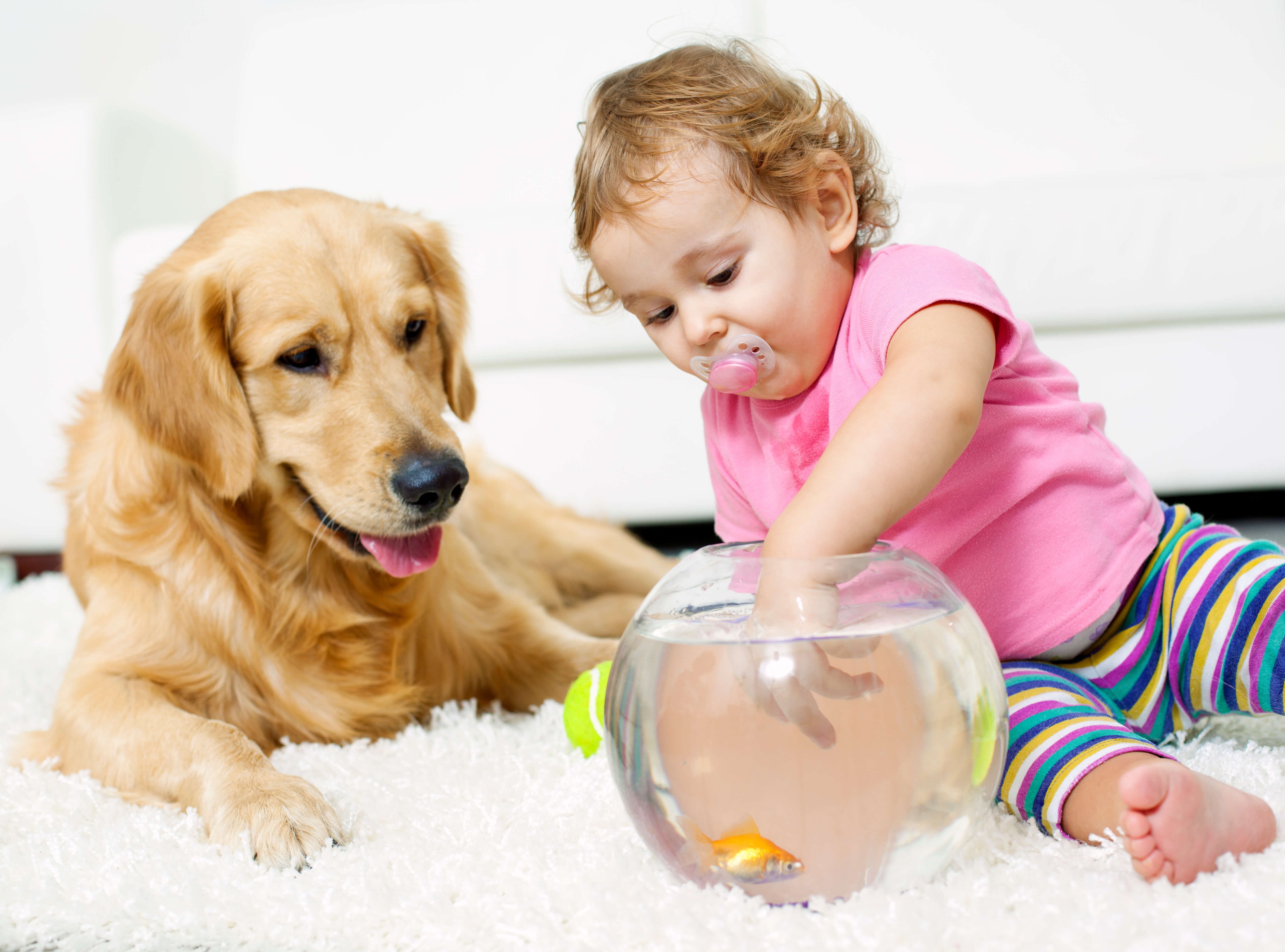 child with puppy on clean carpet