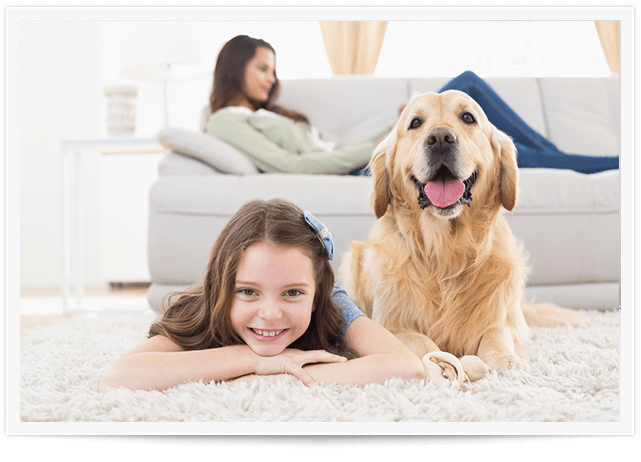 Pet Urine Removal Raleigh NC